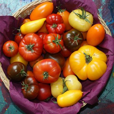 15 points essentiels pour viter le mildiou des tomates. Black Bedroom Furniture Sets. Home Design Ideas
