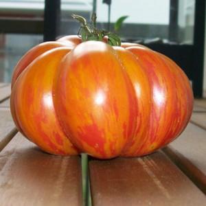 Comment produire vos propres graines de tomates