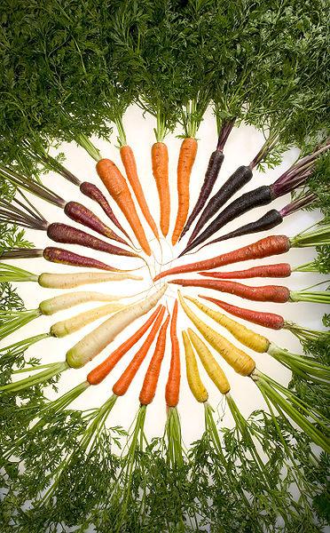 La culture de la carotte au potager bio