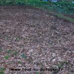 Mulch d'automne, destiné à préparer la terre pour le printemps