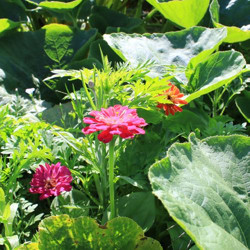 Où trouver vos plantes pour vos préparations naturelles ?