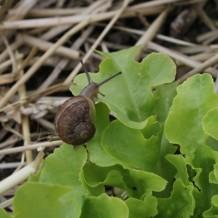 Comment gérer escargots et limaces au jardin potager bio