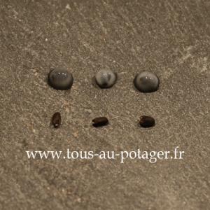 En haut, les graines ayant été en contact avec de l'eau ont formé du mucilage