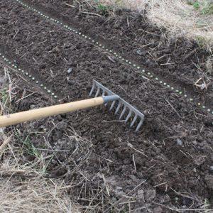 Recouvrir les pois de 2-3 cm de terre