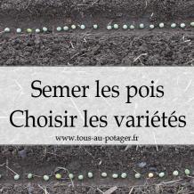Pois : Quand et comment les semer, choisir ses variétés