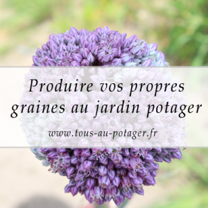 Comment produire ses propres graines ? Introduction à la production de semences