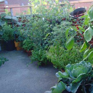15 conseils pour réussir son potager de balcon et de terrasse