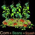 8 associations de plantes testées au potager et verger bio